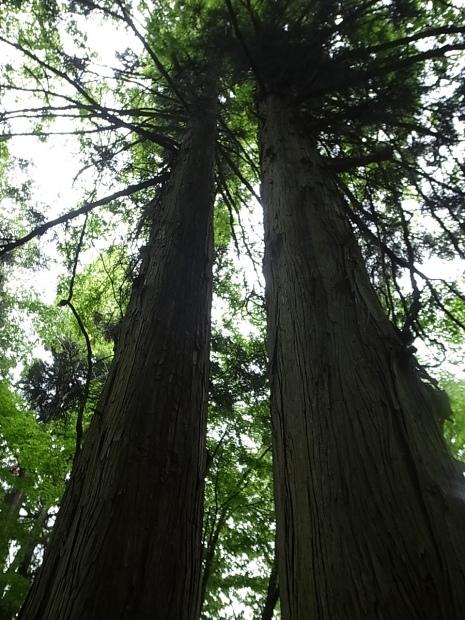岡山県新庄村森林セラピー ゆりかごの森_f0197703_16132696.jpg