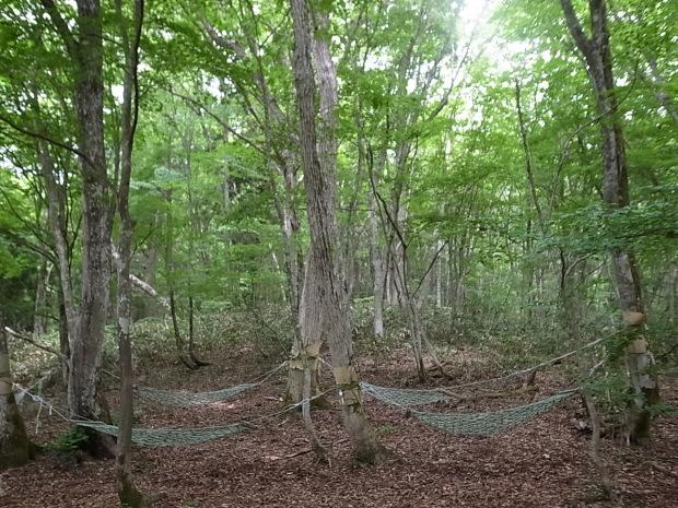 岡山県新庄村森林セラピー ゆりかごの森_f0197703_16165586.jpg