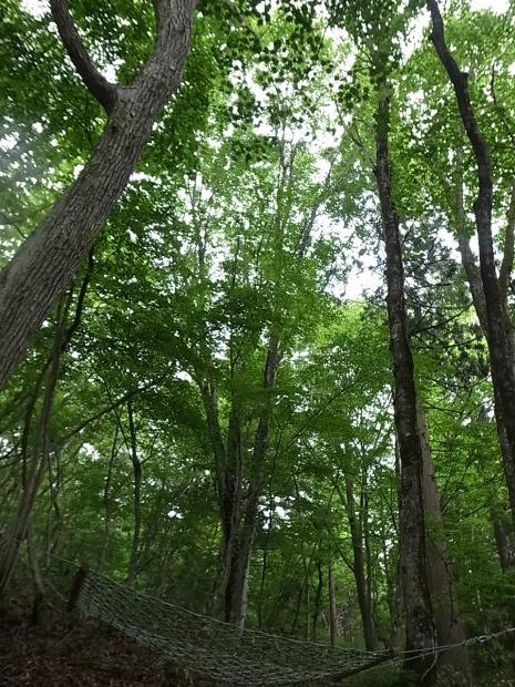 岡山県新庄村森林セラピー ゆりかごの森_f0197703_16183492.jpg