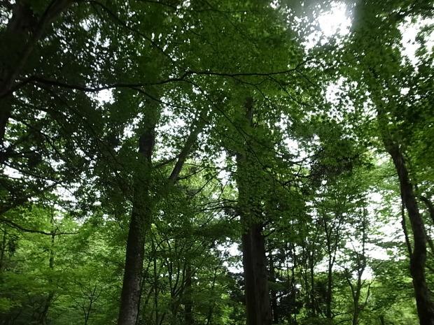 岡山県新庄村森林セラピー ゆりかごの森_f0197703_16192920.jpg