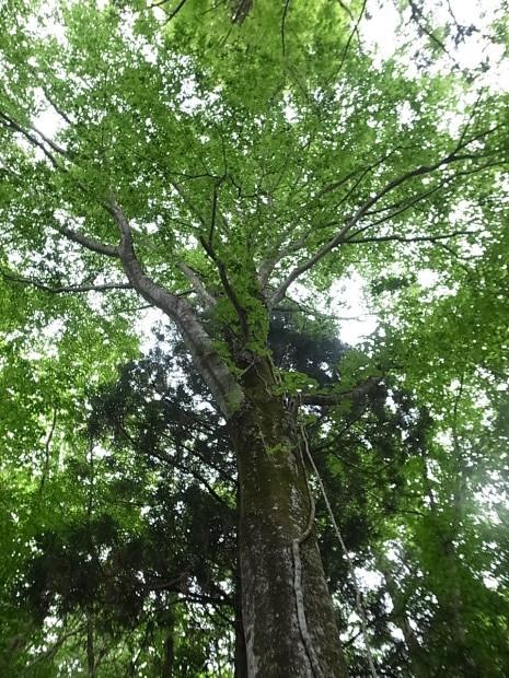 岡山県新庄村森林セラピー ゆりかごの森_f0197703_16200907.jpg