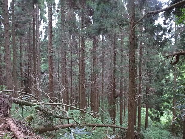 岡山県新庄村森林セラピー ゆりかごの森_f0197703_16203551.jpg