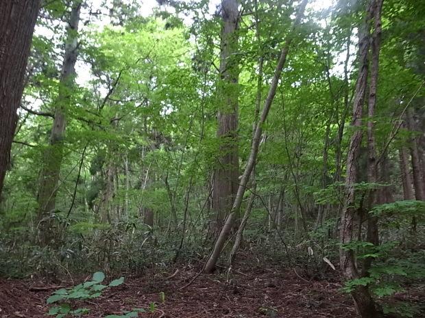 岡山県新庄村森林セラピー ゆりかごの森_f0197703_16211303.jpg