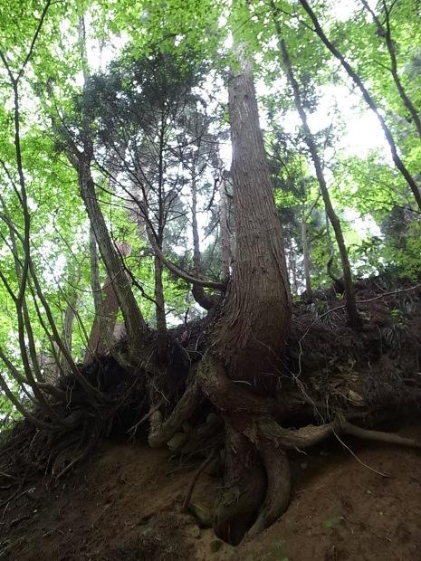 岡山県新庄村森林セラピー ゆりかごの森_f0197703_16235635.jpg