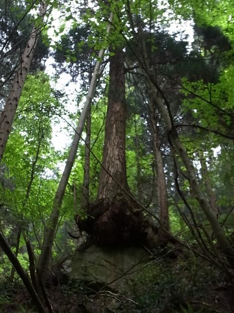 岡山県新庄村森林セラピー ゆりかごの森_f0197703_16275745.jpg