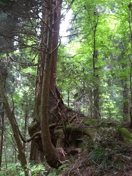 岡山県新庄村森林セラピー ゆりかごの森_f0197703_16292303.jpg