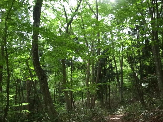 岡山県新庄村森林セラピー ゆりかごの森_f0197703_16311073.jpg