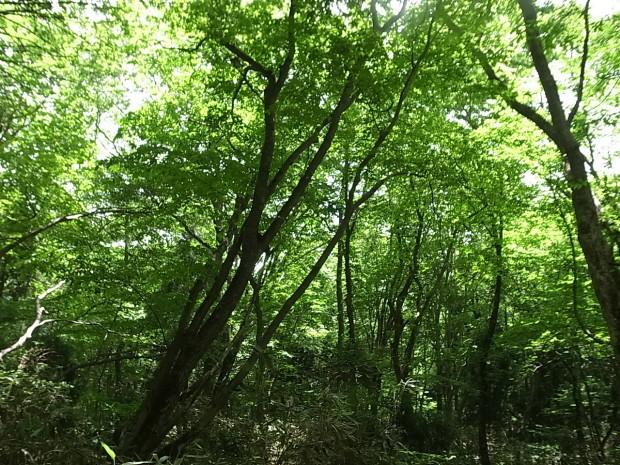 岡山県新庄村森林セラピー ゆりかごの森_f0197703_16325420.jpg