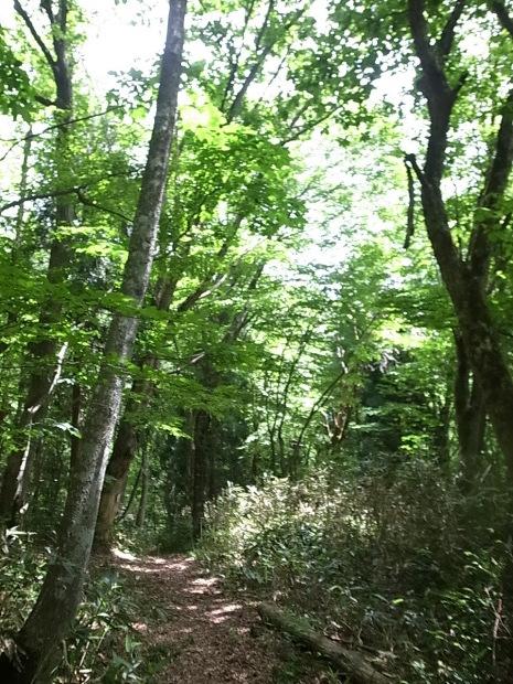 岡山県新庄村森林セラピー ゆりかごの森_f0197703_16365562.jpg