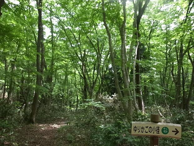 岡山県新庄村森林セラピー ゆりかごの森_f0197703_16390790.jpg
