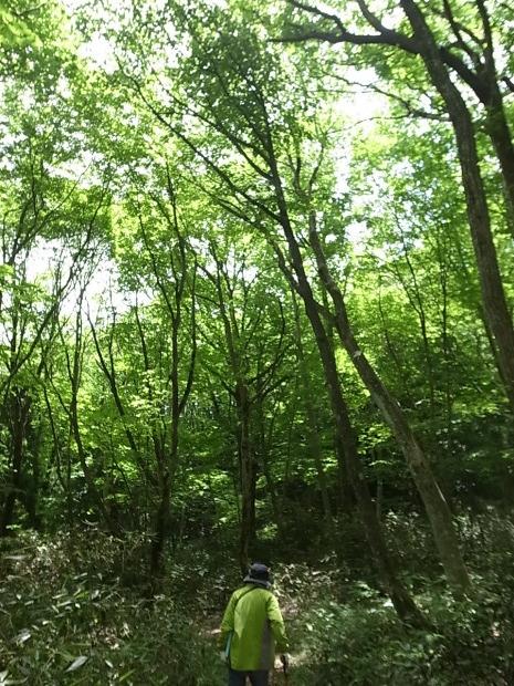岡山県新庄村森林セラピー ゆりかごの森_f0197703_16402859.jpg