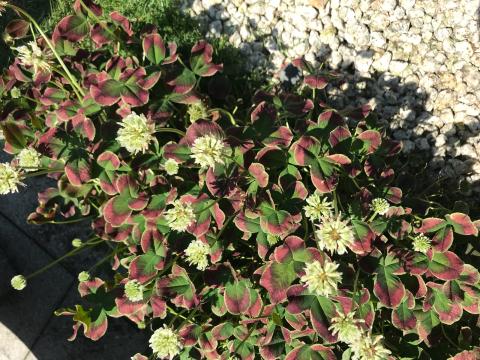 花を見に_e0201009_22515691.jpg