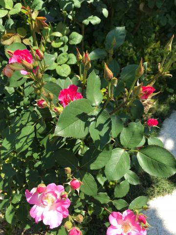 花を見に_e0201009_22515857.jpg