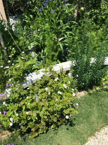 花を見に_e0201009_22515977.jpg