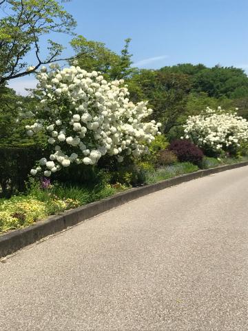 花を見に_e0201009_22543883.jpg