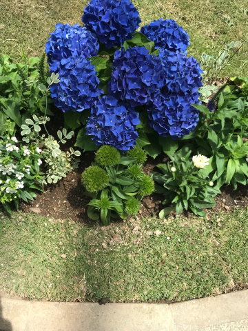 花を見に_e0201009_23083457.jpg