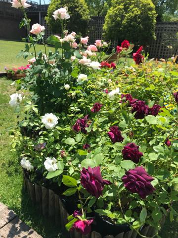 花を見に_e0201009_23085255.jpg
