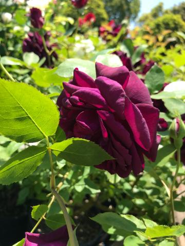 花を見に_e0201009_23085391.jpg