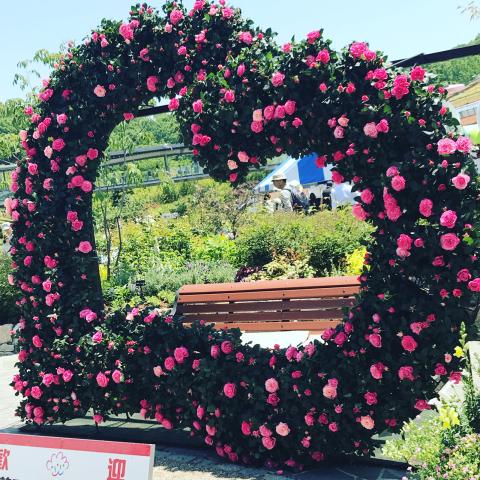 花を見に_e0201009_23100801.jpg