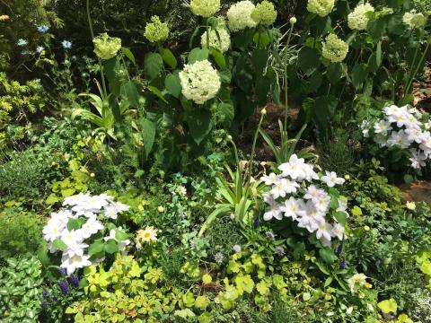花を見に_e0201009_23101459.jpg