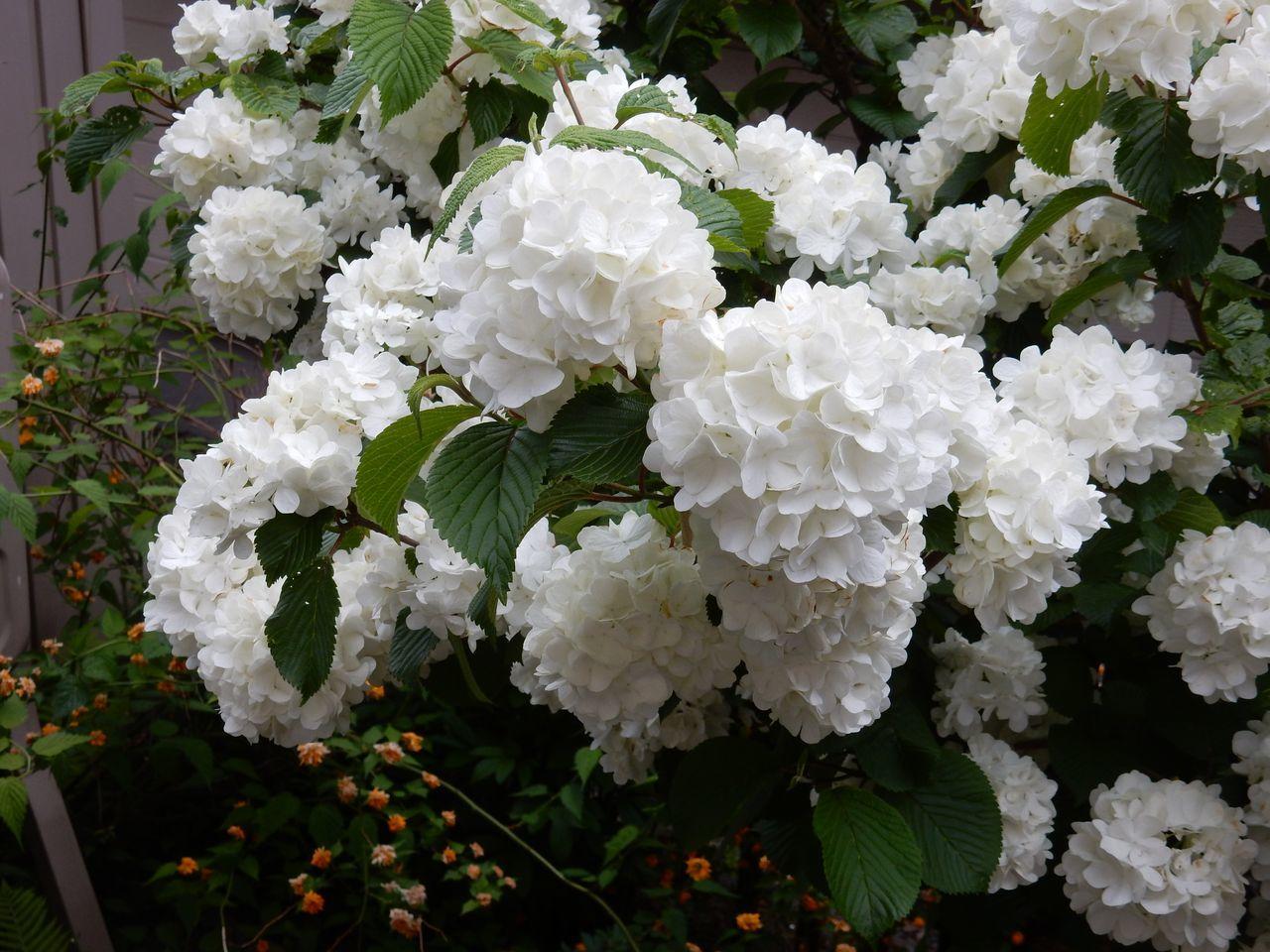 白い花は夏_c0025115_23004763.jpg