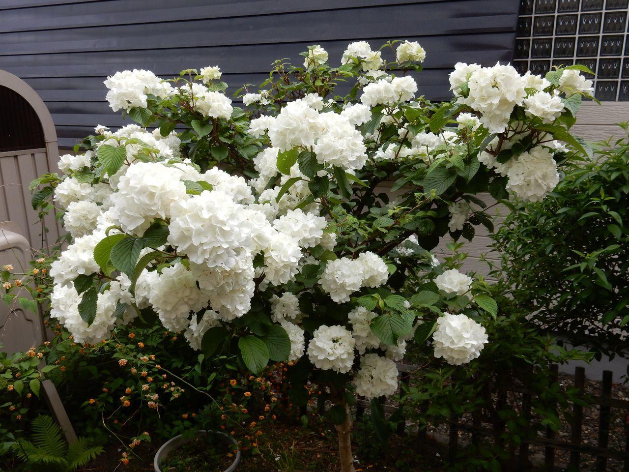 白い花は夏_c0025115_23005376.jpg