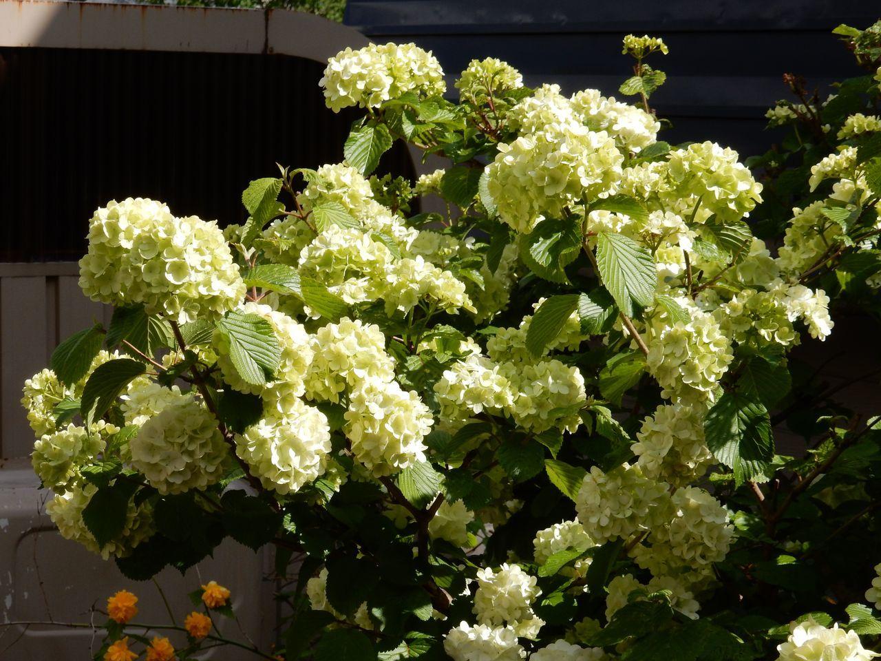 白い花は夏_c0025115_23005911.jpg