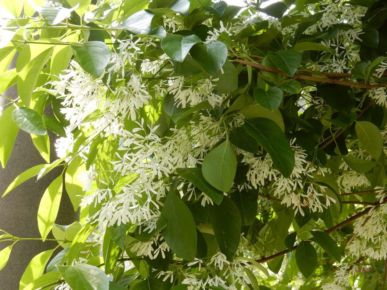 白い花は夏_c0025115_23010903.jpg