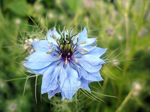 花後の楽しみ その1_f0129726_18581258.jpg