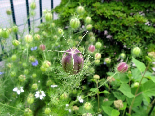 花後の楽しみ その1_f0129726_18584510.jpg