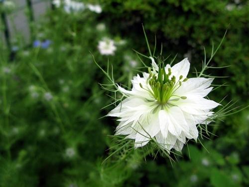 花後の楽しみ その1_f0129726_19005294.jpg