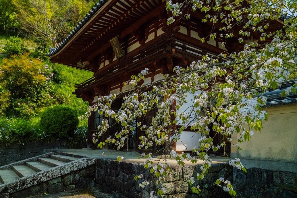 岡寺の石楠花とシャガの花_e0363038_11162439.jpg