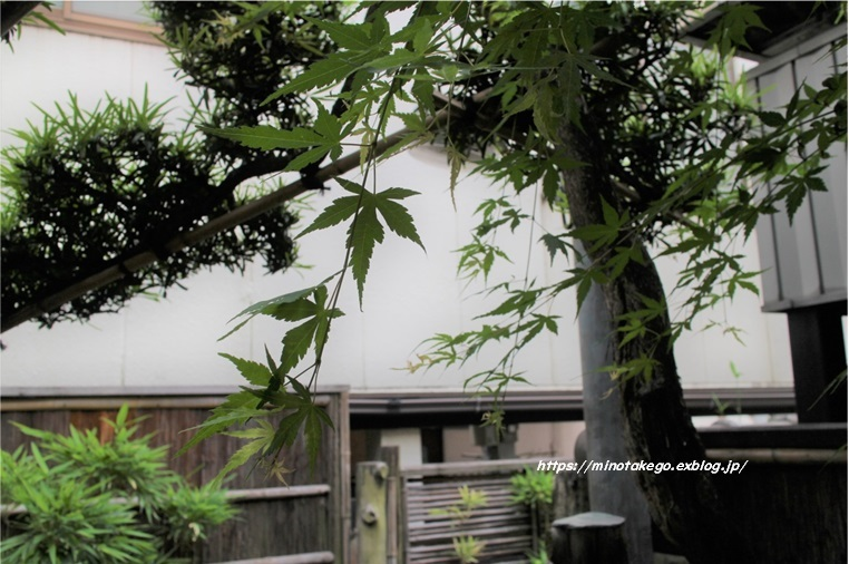 梅雨入り前の家仕事 青もみじの庭_e0343145_15405575.jpg