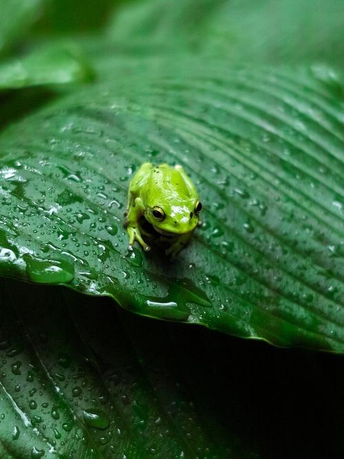 雨の田休・・・ナニワのありんこ天国_d0005250_18532821.jpg