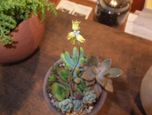 楽しい植木鉢と花器・二人展~2(記録用)_d0336460_00471765.jpg