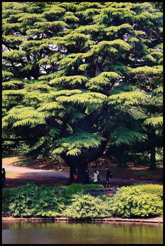 新宿御苑 -27_b0340572_21513668.jpg