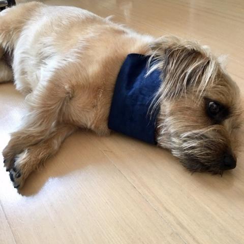 ★インド綿で涼しく♪小型犬ドッグウェア★_b0400675_14243916.jpg