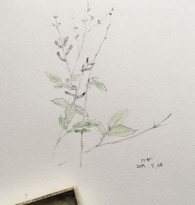 萩が咲いてる_e0085278_06105664.jpg