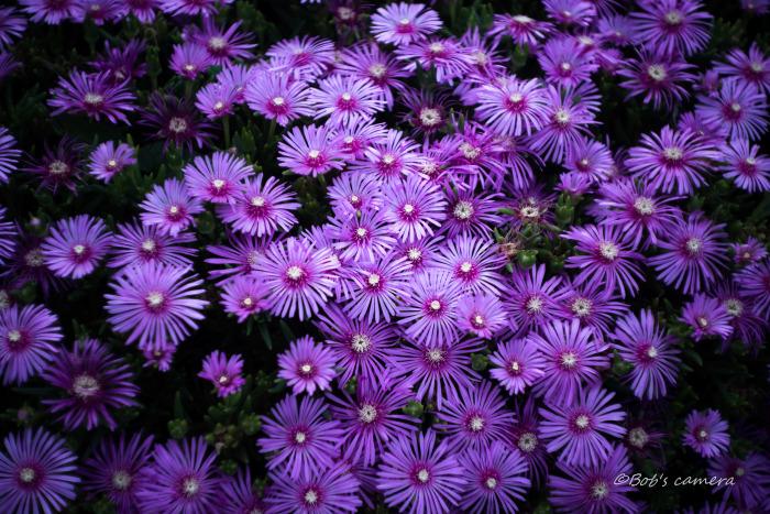 purple_b0246079_04594176.jpg