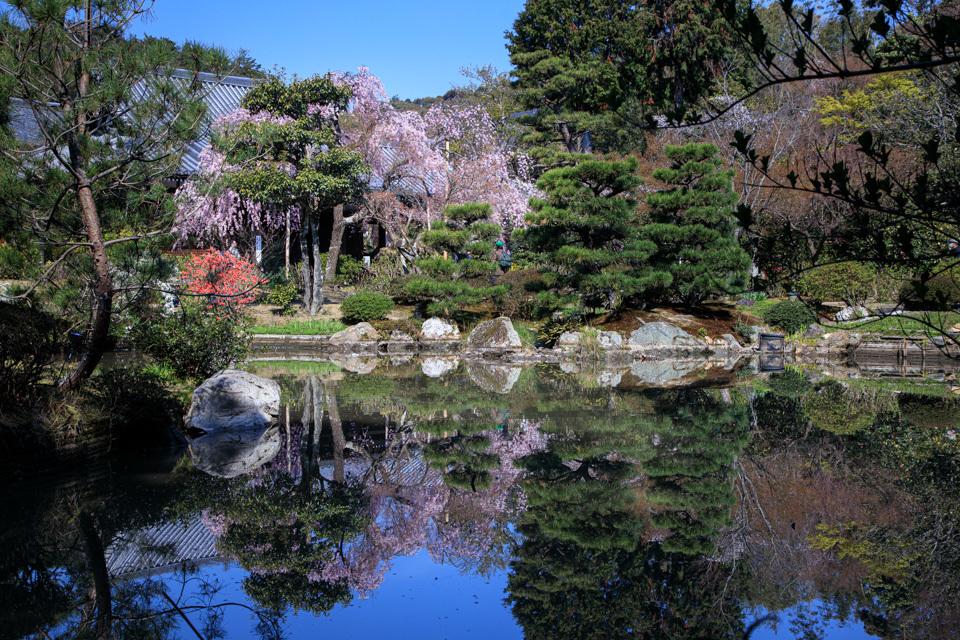 桜 2019!  ~法金剛院~_b0128581_18493270.jpg