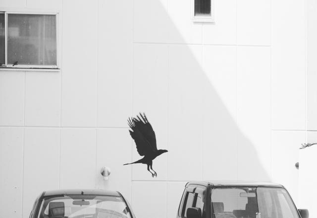 輸出車用大型駐車場でのカラス対策<現地調査>【鳥獣対策ブログ】_a0321697_16533576.jpg