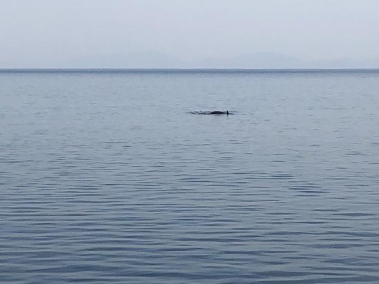 PTA文化委員会「クジラ・シャチウォッチング」_d0162600_20221611.jpg