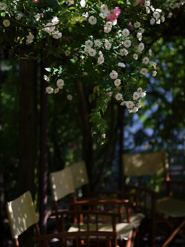 気分はハッセル、花を撮りに行く Flowers #FUJIGFX50S#MAKROPLANAR120mmF4_c0065410_21304970.jpg