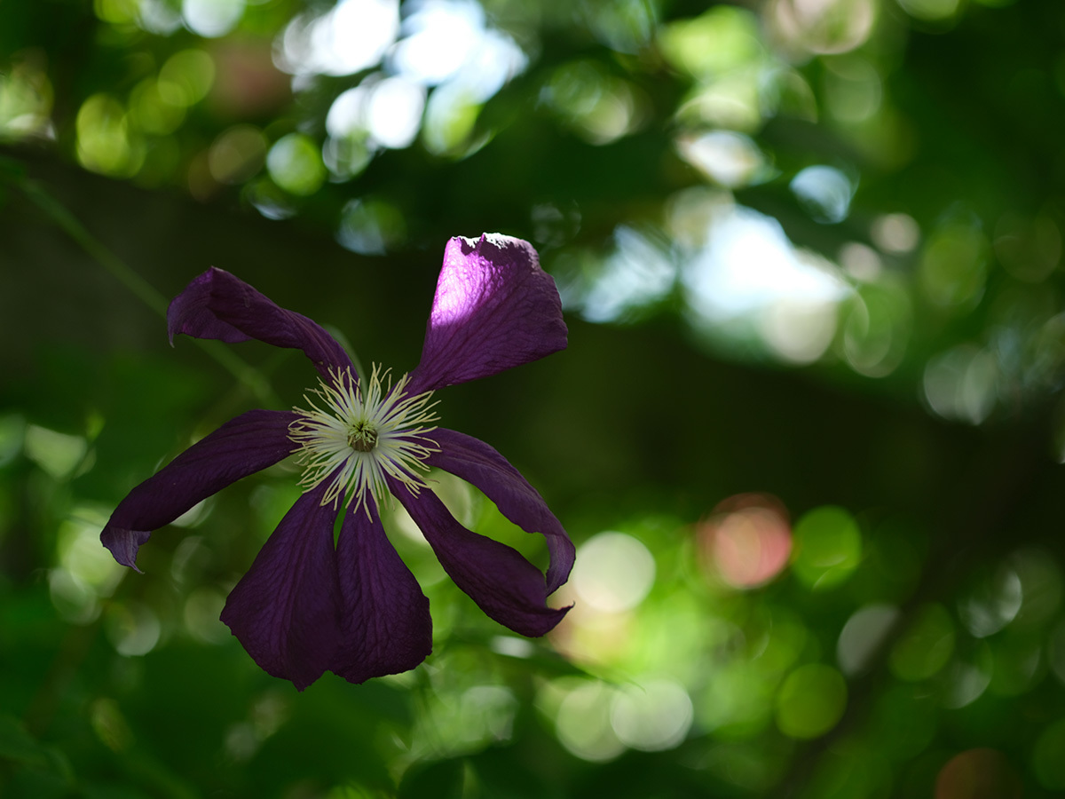 気分はハッセル、花を撮りに行く Flowers #FUJIGFX50S#MAKROPLANAR120mmF4_c0065410_21320372.jpg