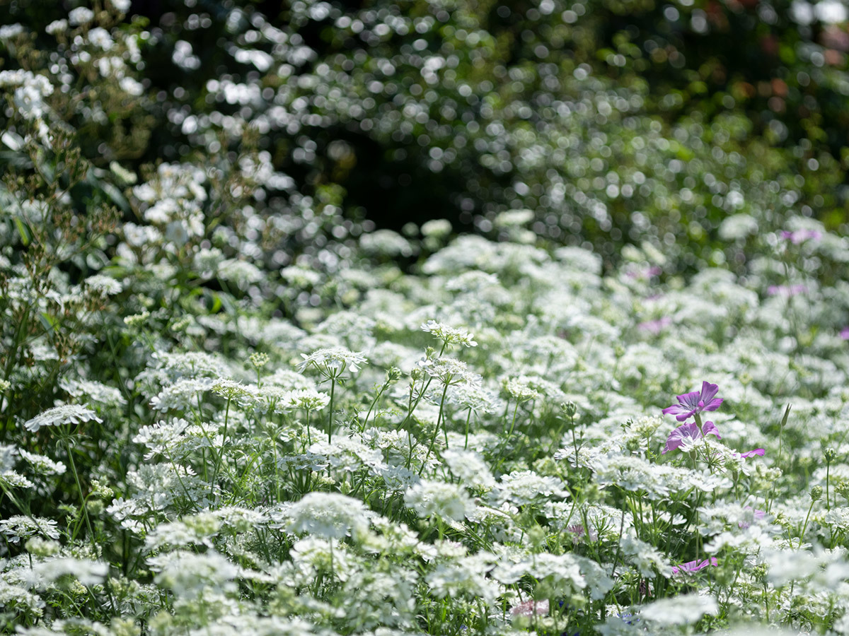気分はハッセル、花を撮りに行く Flowers #FUJIGFX50S#MAKROPLANAR120mmF4_c0065410_21323263.jpg