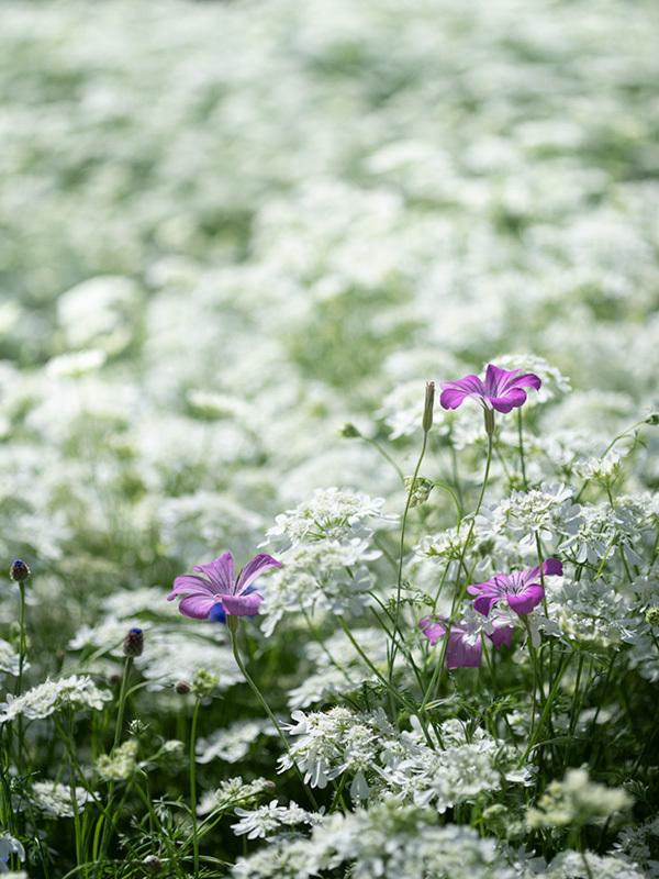 気分はハッセル、花を撮りに行く Flowers #FUJIGFX50S#MAKROPLANAR120mmF4_c0065410_21323796.jpg
