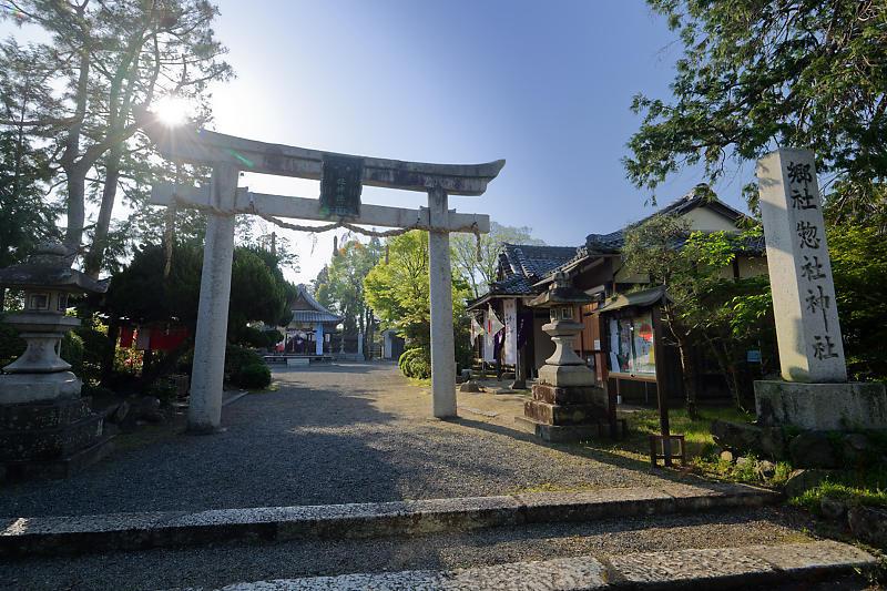 初夏の花巡り・藤@惣社神社_f0032011_22271074.jpg