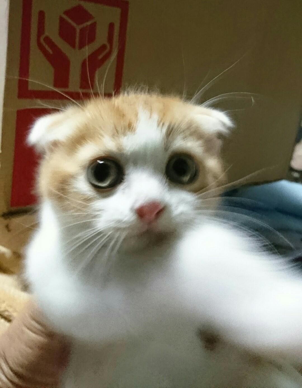 我が家の猫ちゃんです。_d0319812_01234751.jpg