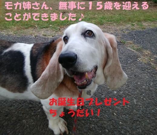 モカ姉さん15歳になりました♪_f0121712_22001977.jpg