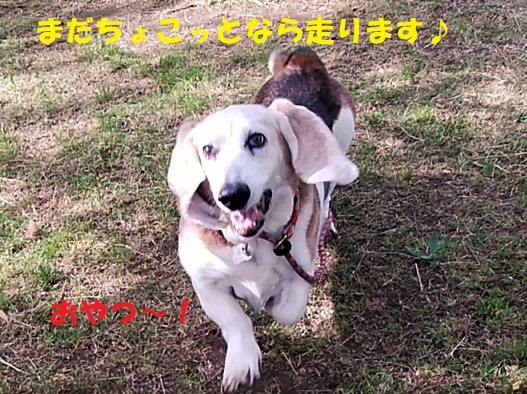 モカ姉さん15歳になりました♪_f0121712_22534060.jpg